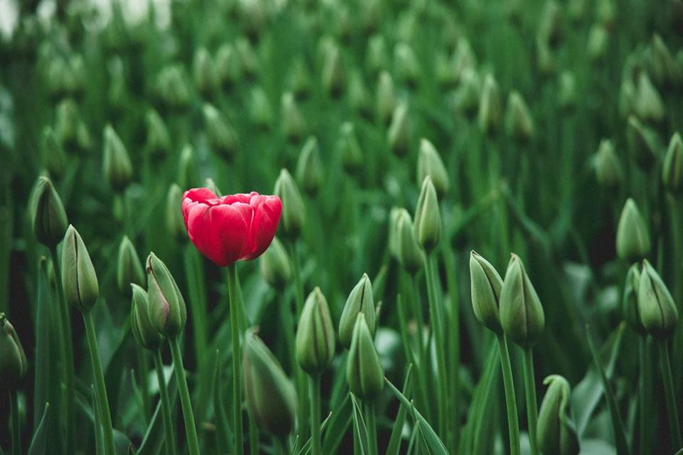 Un Fiore Nel Tuo Domani
